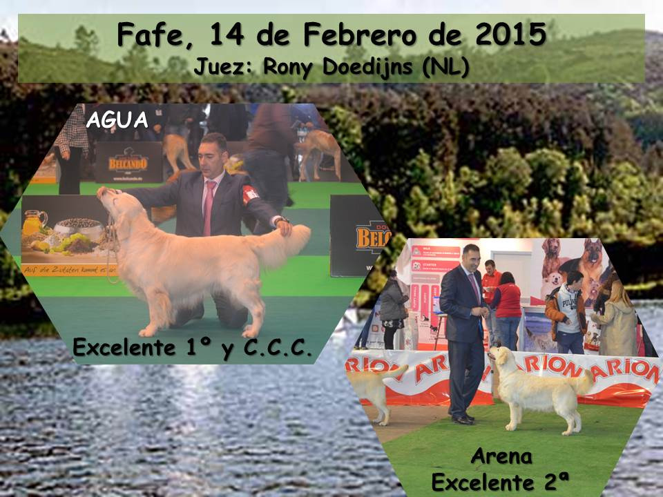noticia fafe 2015